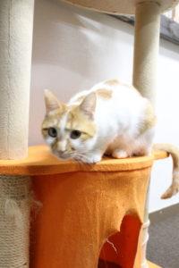 保護猫カフェ ラブラブ