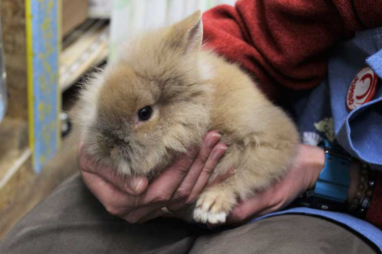 小鳥&小動物ショップ そら ミニウサギ