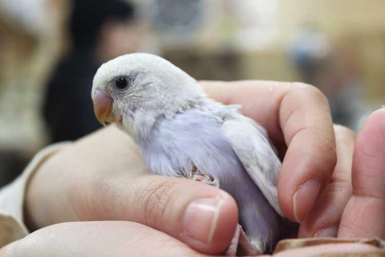 小鳥&小動物ショップ そら 鳥