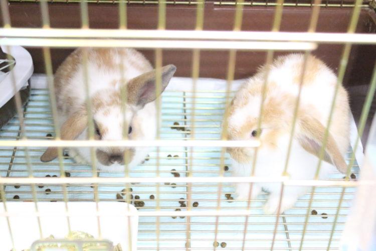小鳥&小動物ショップ そら ウサギ