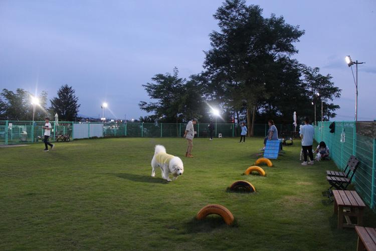 ナイター営業(大型犬エリア)