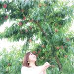 ししどりんご園