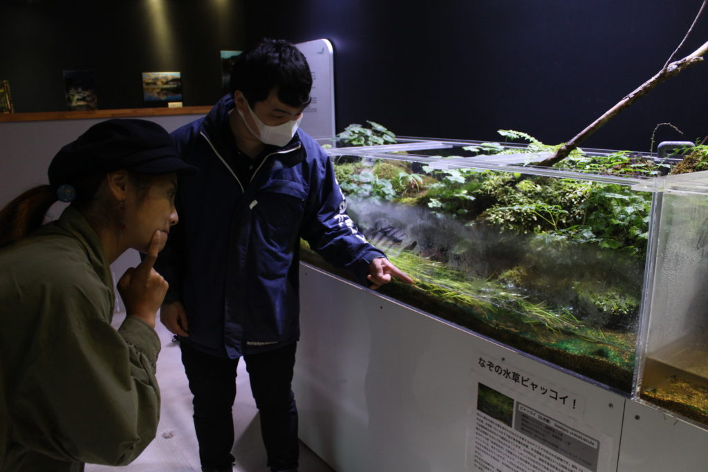 アクアマリンいなわしろカワセミ水族館②