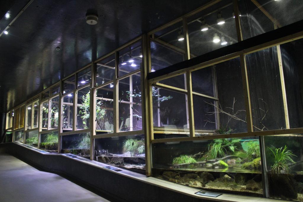 アクアマリンいなわしろカワセミ水族館⑥