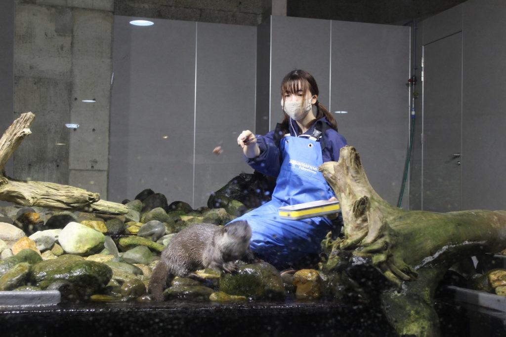 アクアマリンいなわしろカワセミ水族館⑪