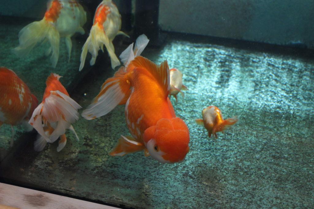 アクアマリンいなわしろカワセミ水族館⑬